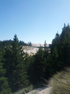 Sand Dunes and Forest